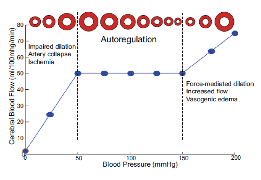 Cerebral autoregulation and the vascular response to blood pressure changes.