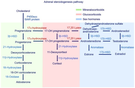 Schematic of the adrenal steroidogenesis biosynthesis pathway. HSD, hydroxysteroid dehydrogenase.